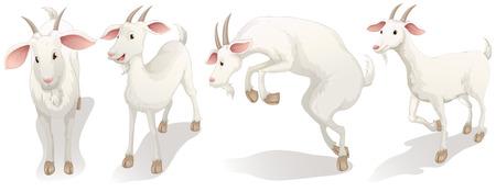 흰색 배경에 네 개의 흰색 염소의 그림