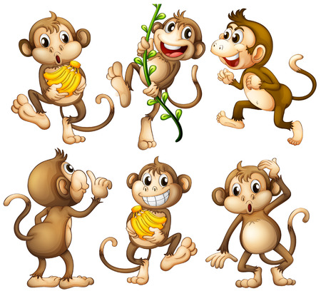 Illustration of the playful wild monkeys on a white background Vector