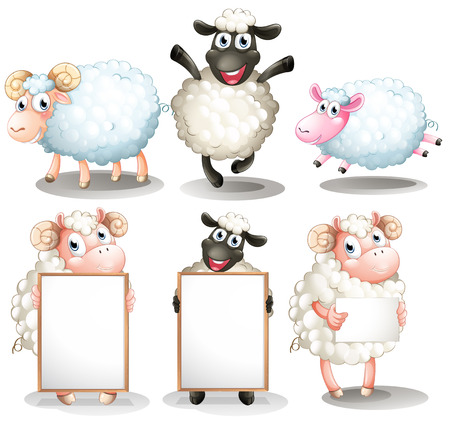 sheep sign: Illustration of the sheeps and lambs with empty boards on a white background Illustration