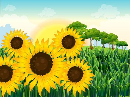 jungle scene: Illustration of the beautiful sunflowers Illustration