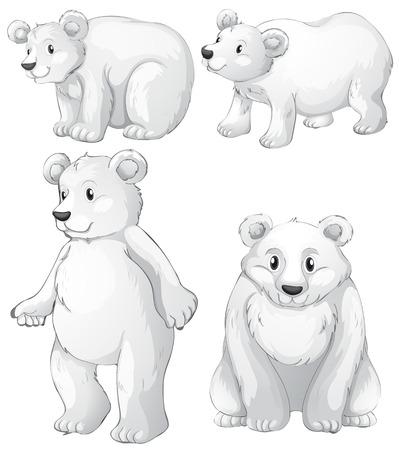 oso caricatura: Ilustración de los cuatro osos polares blancos sobre un fondo blanco