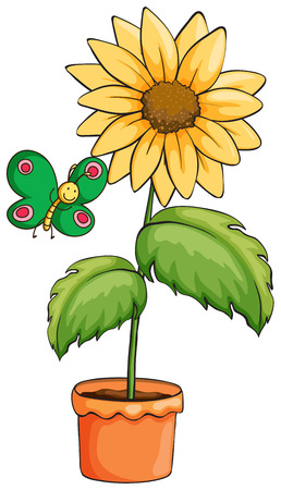 Illustration of a pot with a sunflower on a white background Vector
