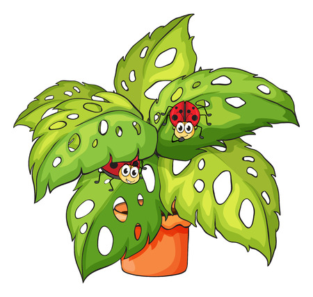 Illustration of a plant with ladybugs on a white background Vector