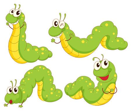 insecto: Ilustración de las cuatro orugas verdes sobre un fondo blanco