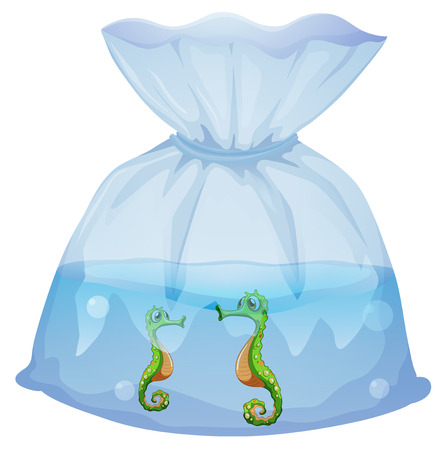 pouch: Illustration of a pouch with seahorses on a white background