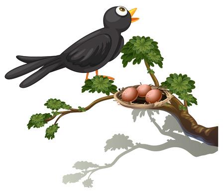 leafy trees: Ilustraci�n de un p�jaro negro en la rama de un �rbol con un nido sobre un fondo blanco