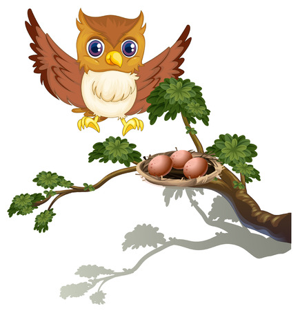 Illustration of an owl watching the eggs at the branch of a tree on a white background Vector