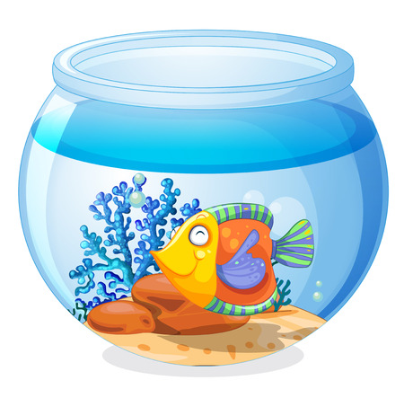 aquarium fish: Illustration of an aquarium with a fish on a white background