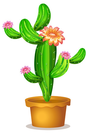 flowering cactus: Illustration of a pot with a flowering cactus plant on a white background