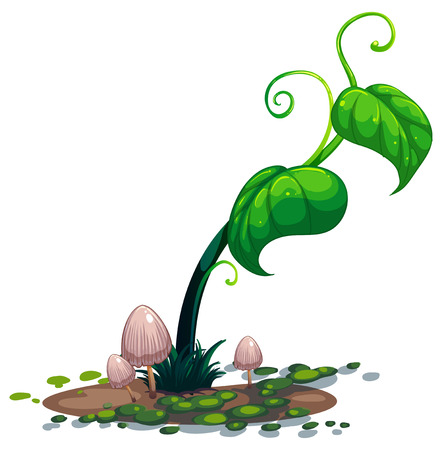 Illustration of a growing green plant on a white background Vector