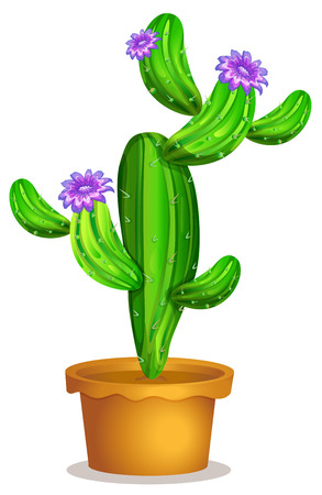 flowering cactus: Illustration of a cactus plant in a pot on a white background