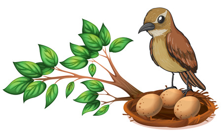 nest egg: Illustration of a bird at the branch of a tree watching the nest on a white background