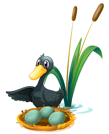 Illustration of a duck at the pond beside her eggs on a white background Vector