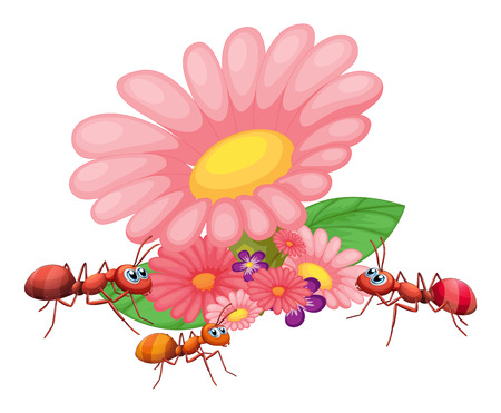 Illustration of the fresh flowers with ants on a white background Vector
