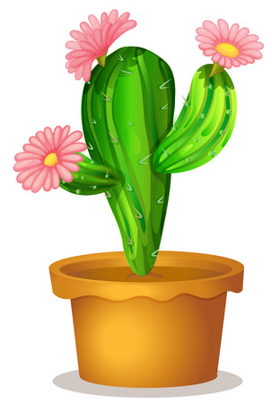 Illustration of a cactus plant with pink flowers on a white background Vector