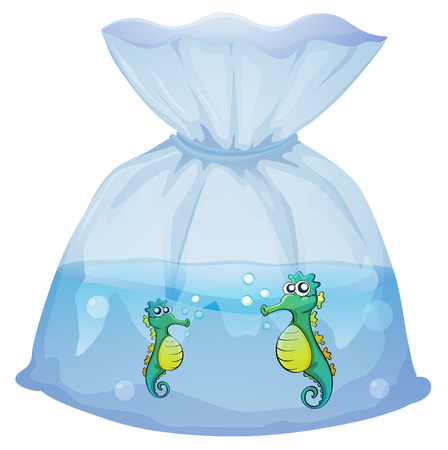 pouch: Illustration of the seahorses inside the plastic pouch on a white background