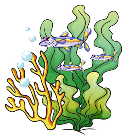underworld: Illustration of the three fishes under the sea near the seaweeds on a white background