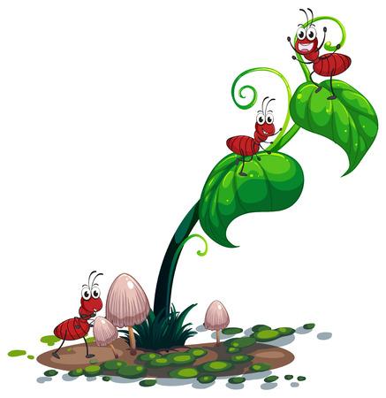 hormiga hoja: Ilustración de una planta verde con las hormigas en un fondo blanco