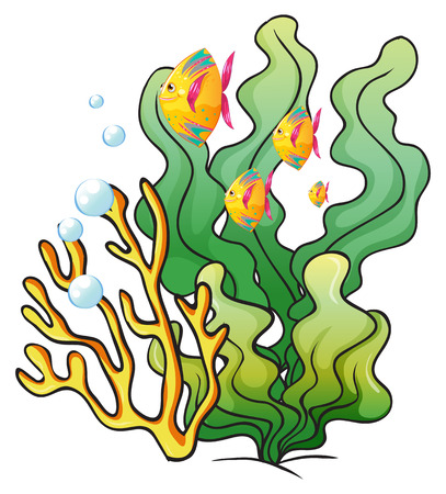 seafoods: Illustration of a school of fishes near the seaweeds on a white background
