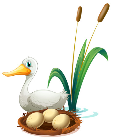 duck egg: Illustration of a duck beside the nest on a white background