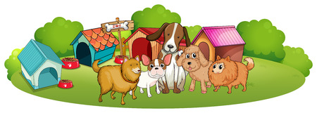 animal shelter: Illustration of the cute dogs outside the doghouses on a white background Illustration