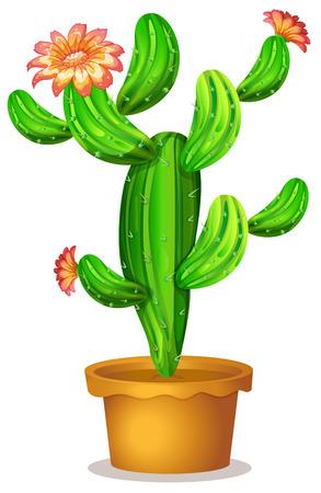 ollas de barro: Ilustración de una planta de cactus con flores sobre un fondo blanco