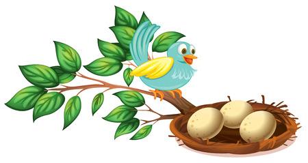 nido de pajaros: Ilustración de un pájaro azul mirando a los huevos en el nido sobre un fondo blanco