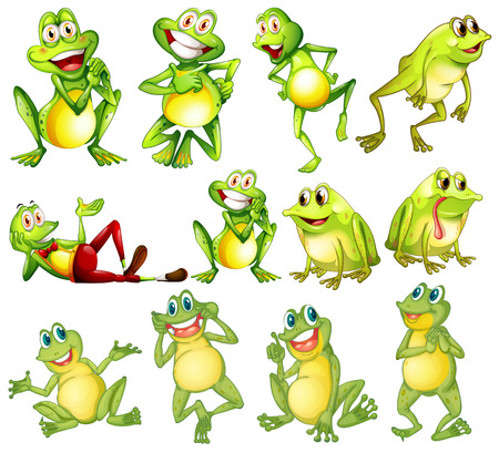 funny: Illustration of different positions of frogs