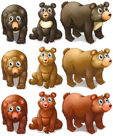 oso caricatura: Ilustraci�n de diferentes tipos de osos Vectores