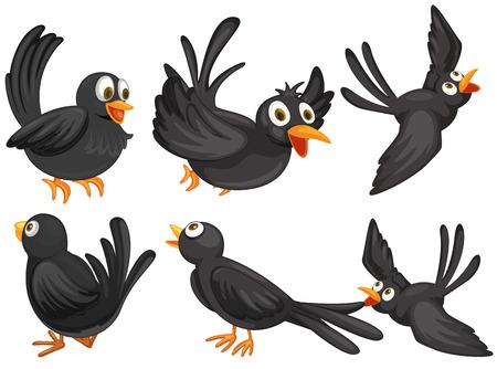 cartoon bird: Illustration of a set of black birds