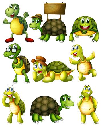 tortuga de caricatura: Infograf�a de un conjunto de tortuga con acciones
