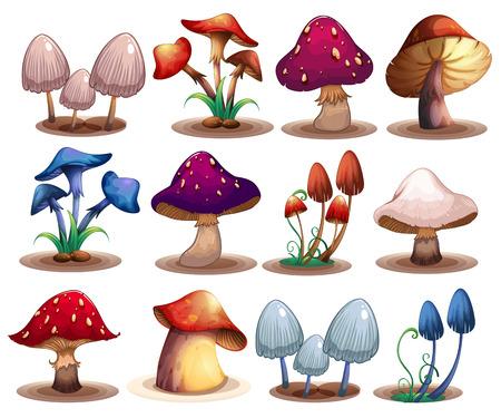 Illustration d'un ensemble de différents champignons Vecteurs