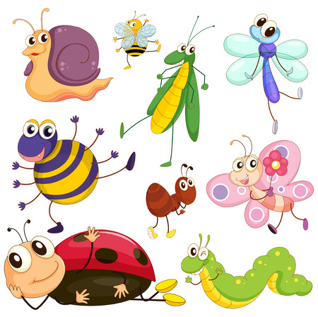 Illustration of the different insects on a white background Vector