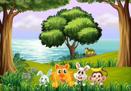 tortuga caricatura: Ilustración de los animales en el bosque