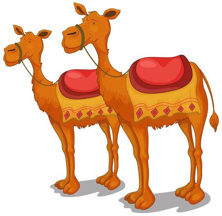 Illustration de chameaux