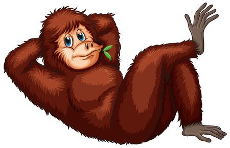 Illustration of an orangutan Çizim