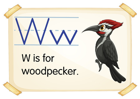 woodpecker: Illustration of a flashcard with letter W