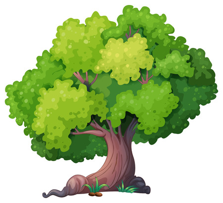 Illustration of a closeup tree Illustration