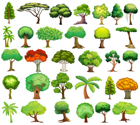 Illustration of different kind of tree Vettoriali