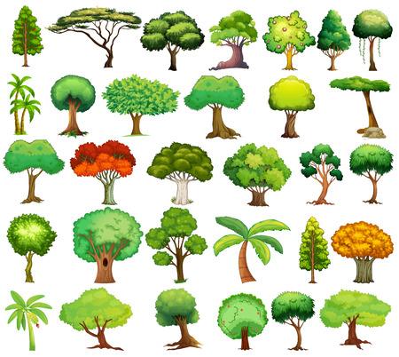 arboles frutales: Ilustraci�n de diferentes tipos de �rboles Vectores
