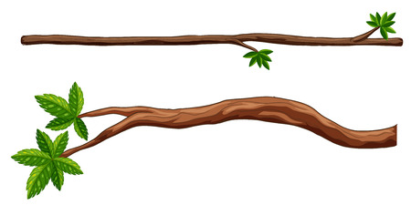 branch: Illustration of two closeup branches