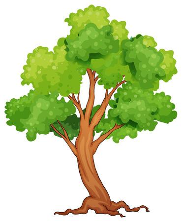 rainforest tree: Illustration of a closeup single tree