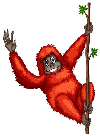 orangutan: Illustration of a orangutan hanging from a vine