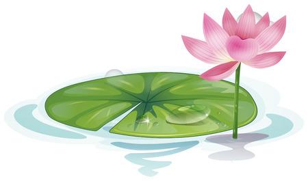 Illustrazione di una stretta di loto