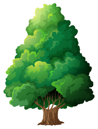 Illustration of a single tree Illustration