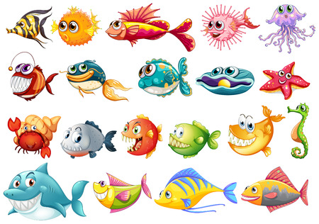 Illustration of different kinds of fish Illustration