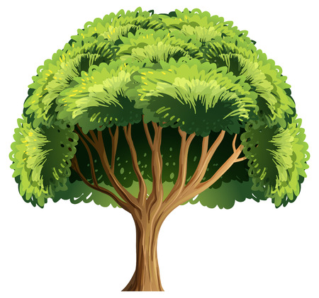 Illustration of a single tree Vector
