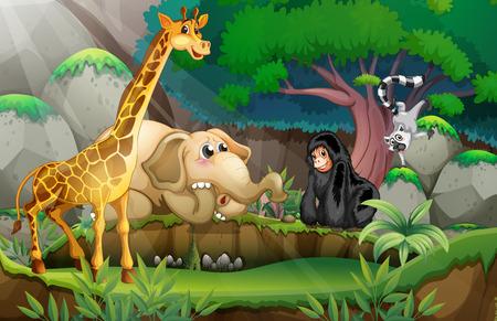 dark jungle green: Illustration of many animals in a jungle
