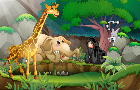 Illustration of many animals in a jungle
