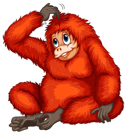 conserved: Illustration of an orangutan Illustration